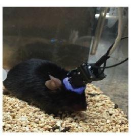 Bruchas pub_nVista mouse.jpg