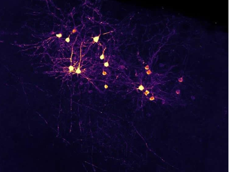 neuron-connection-theory-neurosciencenews