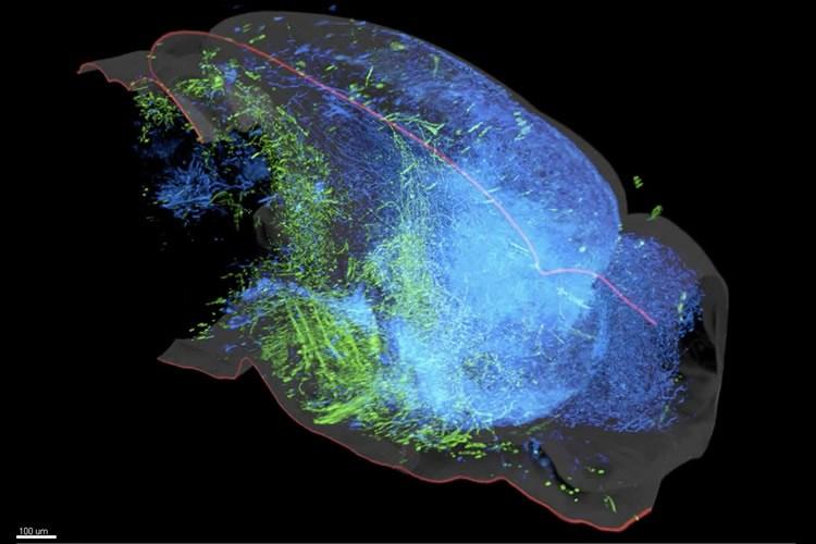 serotonin-system-neurosciencenews